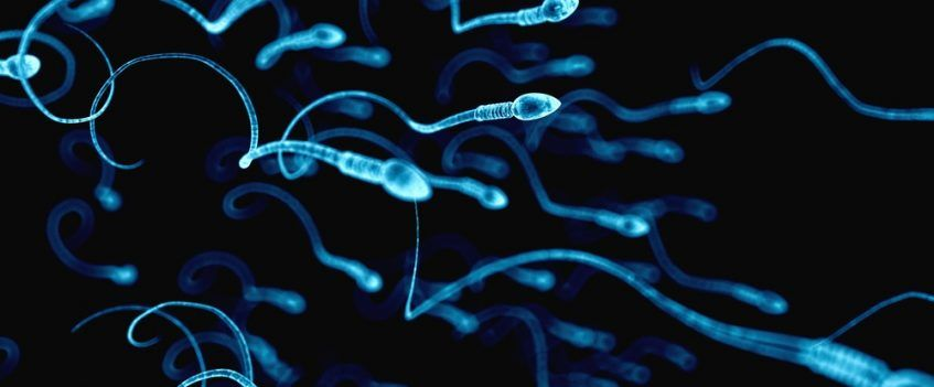 sperm counts study