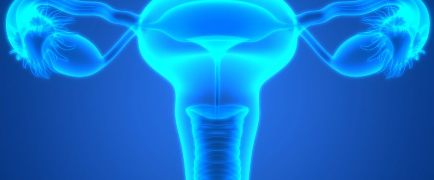 Female,Reproductive,System, ovaries, ovarian cancer